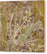 Wild Sage Wormwood Artemisia Figida Yellow Flower Wood Print