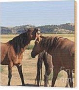 Wild Spanish Stallion In Charge Wood Print