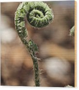 Wild Spring Fern Wood Print