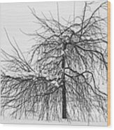 Wild Springtime Winter Tree Black And White Wood Print by James BO  Insogna