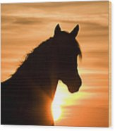 Wild Stallion At Sunrise Wood Print