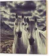 Wild Stallions Wood Print