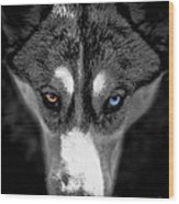 Wild Stare Wood Print by Karen Lewis