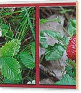 Wild Strawberry Plant - Fragaria Virginiana Wood Print