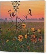 Wild Sunflowers At Dawn Wood Print