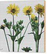 Wild Sunflowers Wood Print