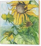 Wild Sunflowers Wood Print by Sherry Harradence