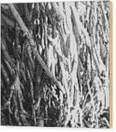 Wild Surface Roots Wood Print by Sandra Pena de Ortiz