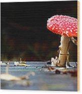 Wild Toadstool Wood Print