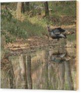 Wild Turkey Crossing Wood Print