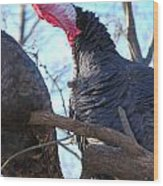 Wild Turkey Gobbling Wood Print