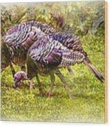 Wild Turkey Hens Wood Print by Barry Jones