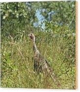 Wild Turkey In The Sun Wood Print