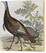 Wild Turkey Wood Print by Titian Ramsey Peale