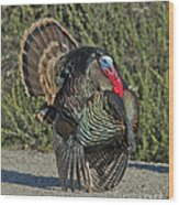 Wild Turkey Tom Wood Print