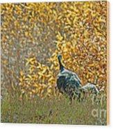 Wild Turkeys And Fall Colors Wood Print