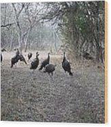 Wild Turkeys II Wood Print