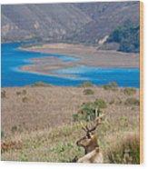 Wild Wapiti Surveying His Kingdom Wood Print