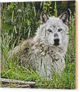 Wild Wolf Wood Print