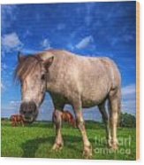 Wild Young Horse On The Field Wood Print
