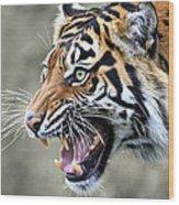 Wildcat II Wood Print