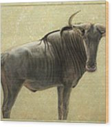 Wildebeest Wood Print by James W Johnson