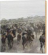 Wildebeest Migration  Wood Print
