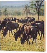 Wildebeests Herd. Gnu On African Savanna Wood Print
