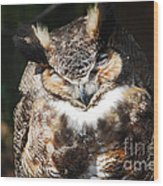 Wilderness Owl Wood Print