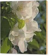 Wildf Apple Blossoms Wood Print