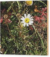 Wildflower @ Kit Carson Wood Print