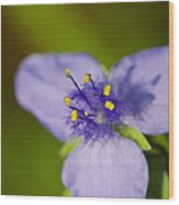 Wildflower 1 - Botanical Photography By Sharon Cummings Wood Print