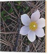 Wildflower Among Pine Needles Wood Print