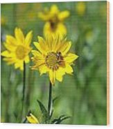 Wildflower Bee Wood Print