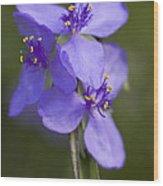 Wildflower Blues Wood Print