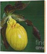 Wildflower Lady Slipper Wood Print