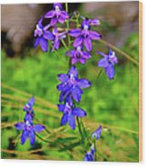 Wildflower Larkspur Wood Print
