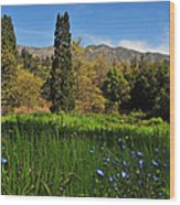 Wildflower Meadow At Descanso Gardens Wood Print by Lynn Bauer