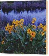 Wildflower Reflection Wood Print