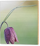 Wildflower Snakes Head Fritillary Wood Print by Tim Gainey
