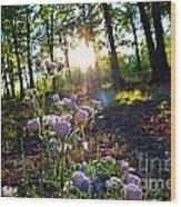 Wildflower Sunset Wood Print