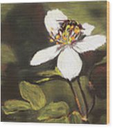 Wildflower Wildlife Wood Print