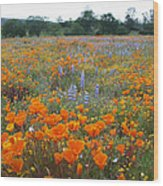 Wildflower Wonderland Wood Print