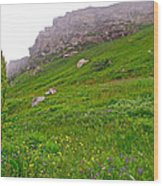 Wildflowers And Mountainous Bluffs At Point Amour In Labrador Wood Print
