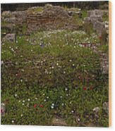 Wildflowers And Olympia Ruins   #9594 Wood Print