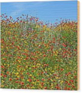 Wildflowers And Sky 2am-110541 Wood Print