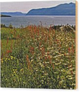Wildflowers At Lobster Cove Head In Gros Morne Np-nl Wood Print