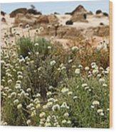 Wildflowers At Mungo National Park Wood Print