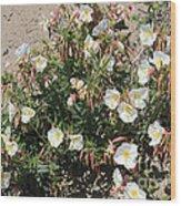 Wildflowers - Desert Primrose Wood Print