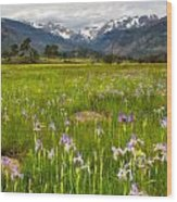 Wildflowers In Rocky Mountain National Park Wood Print